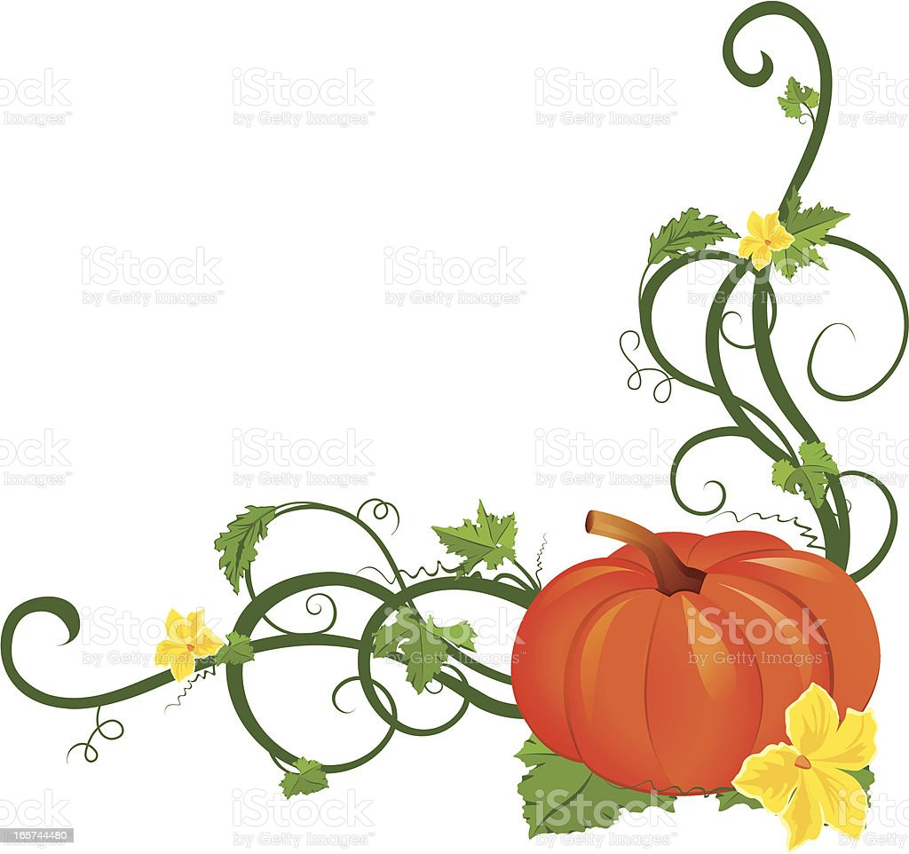 pumpkin vine border stock vector art more images of angle rh istockphoto com