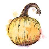 Pumpkin Watercolor and Ink Vector Illustration