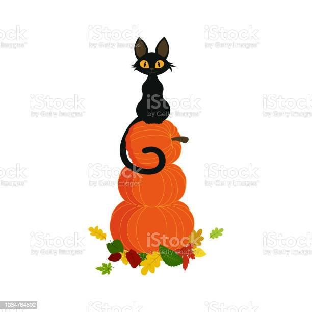 Pumpkin with black cat vector id1034764602?b=1&k=6&m=1034764602&s=612x612&h=g 3lt8mtoyi6ty wkvgsv1e88u01jvirnsvhq udjda=