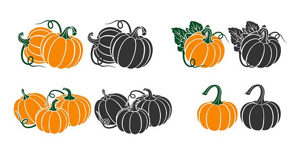 Pumpkins with leaves, silhouette on white background. Vector illustration for Autumn harvest, Harvest Festival or Thanksgiving Day. Environmentally friendly Vegetables. Vector Illustration.