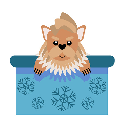 A puppy as a gift. Vector icon portrait of a small dog looking out of a box, drawn in the flat style. Cute Yorkshire terrier puppy. Vector illustration in cartoon style. Toy dog