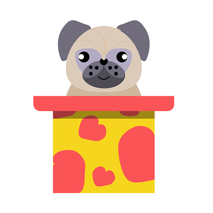 A puppy as a gift. Vector icon portrait of a small dog looking out of a box, drawn in the flat style. Cute pugr  puppy. Vector illustration in cartoon style. Toy dog