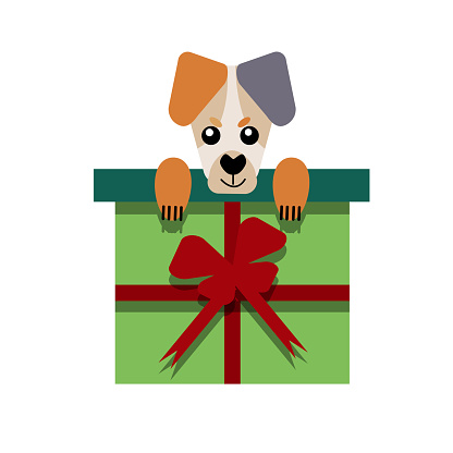 A puppy as a gift. Vector icon portrait of a small dog looking out of a box, drawn in the flat style. Cute Jack Russell Terrier  puppy. Vector illustration in cartoon style.