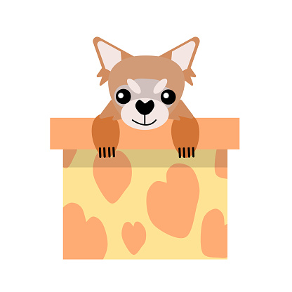 A puppy as a gift. Vector icon portrait of a small dog looking out of a box, drawn in the flat style. Cute Chihuahua puppy. Vector illustration in cartoon style. Toy dog