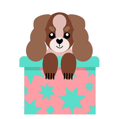 A puppy as a gift. Vector icon portrait of a small dog looking out of a box, drawn in the flat style. Cute Cavalier King Charles Spaniel puppy. Vector illustration in cartoon style. Toy dog