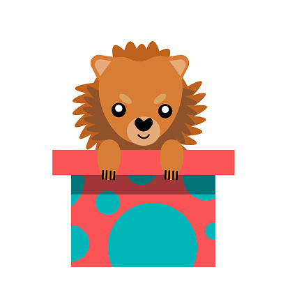 A puppy as a gift. Vector icon portrait of a small dog looking out of a box, drawn in the flat style. Cute Pomeranian  puppy. Vector illustration in cartoon style. Toy dog