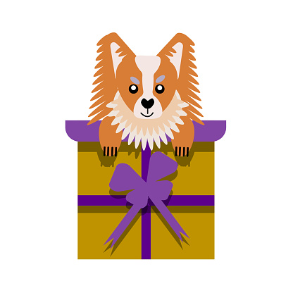 A puppy as a gift. Vector icon portrait of a small dog looking out of a box, drawn in the flat style. Cute Papillon  puppy. Vector illustration in cartoon style. Toy dog