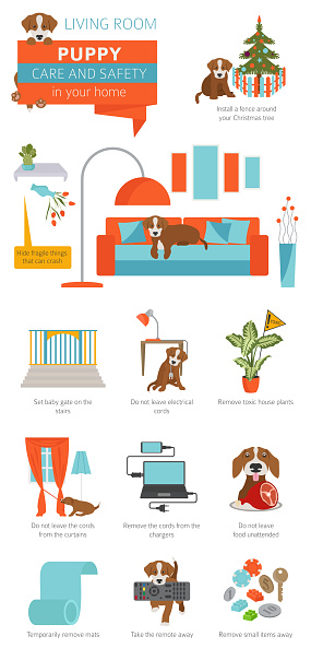 Puppy care and safety in your home. Living room. Pet dog training infographic design