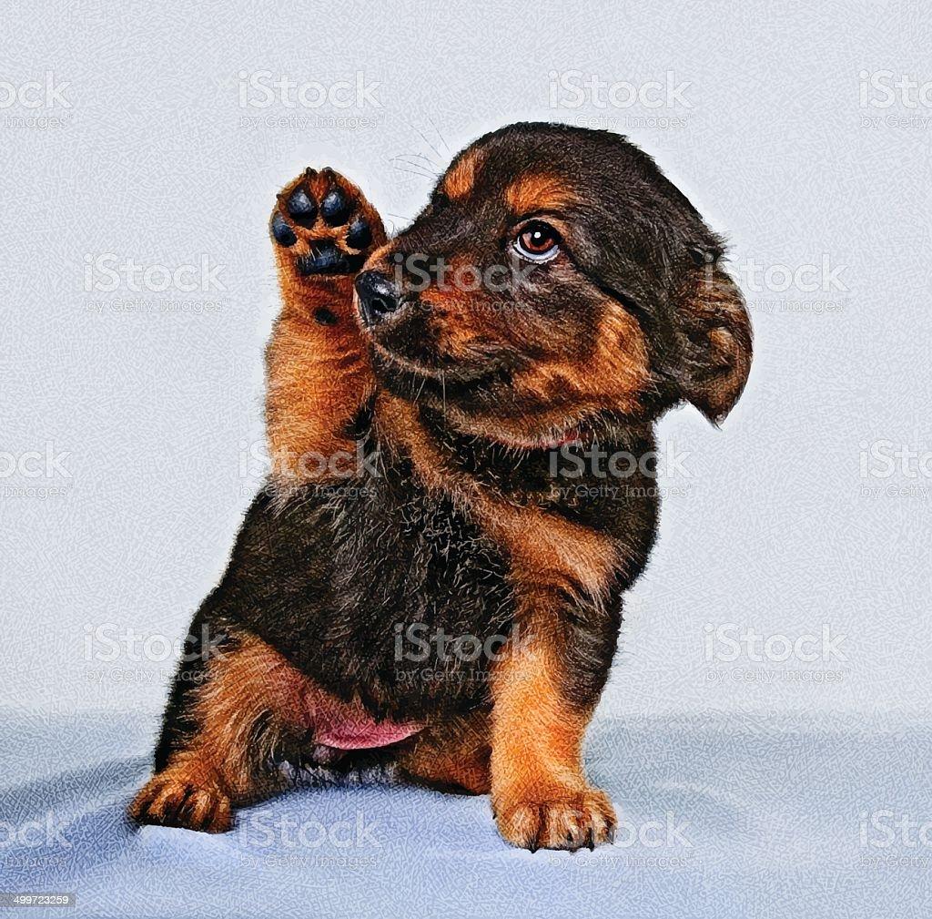 Puppy vector art illustration