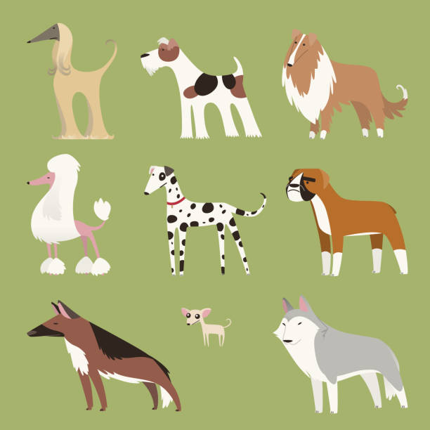 a look at pure and impure breed of dogs All dogs, impure as well as pure-bred, and several wild cousins such as wolves and foxes, are one family each breed was created by human beings, using.
