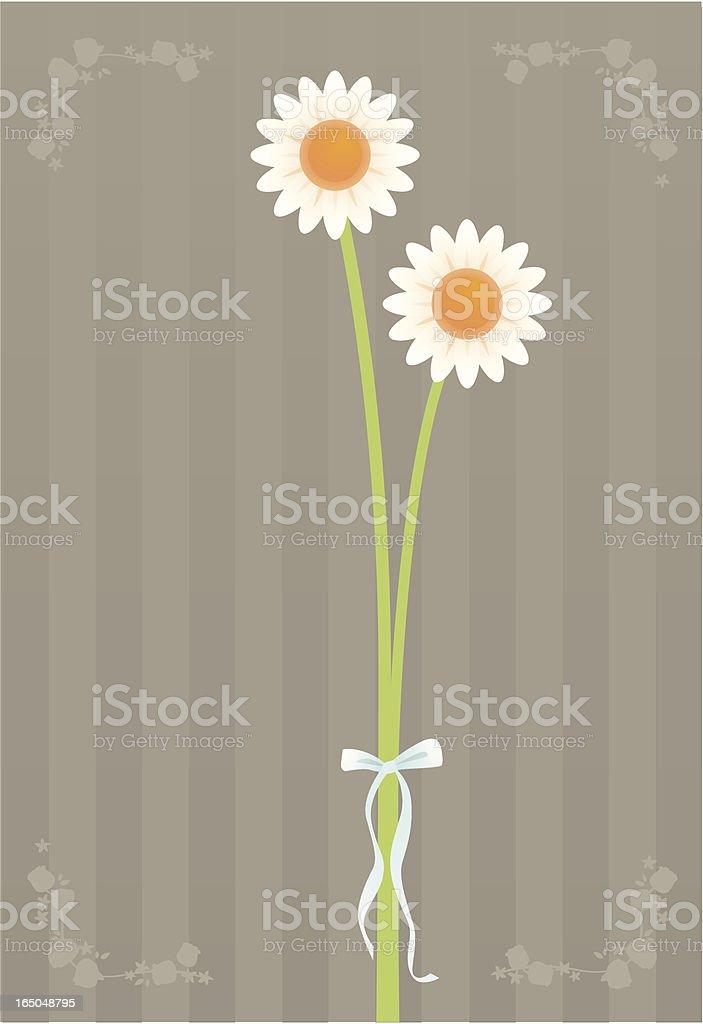 pure daisies vector art illustration