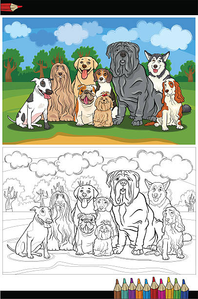 purebred dogs cartoon for coloring book vector art illustration