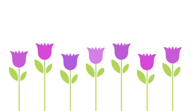 bildbanksillustrationer, clip art samt tecknat material och ikoner med lila enziane blommor bakgrund. - tulpaner