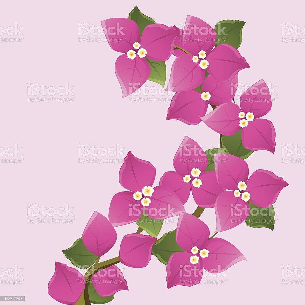 Purple Bougainvillea Floral Branches vektör sanat illüstrasyonu