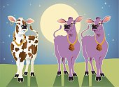 """Cartoon vector of two purple cows and a typical milk cow wearing fancy """"bling"""". Zip includes CS2, AI8 EPS, PDF, and 300 dpi JPG."""