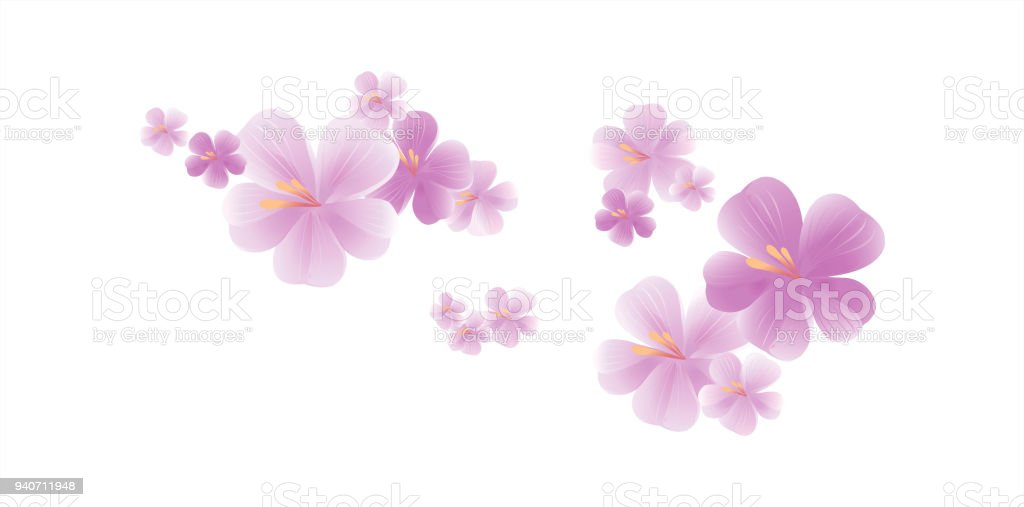 Purple flowers isolated on white background cherry blossom vector purple flowers isolated on white background cherry blossom vector royalty free purple flowers mightylinksfo