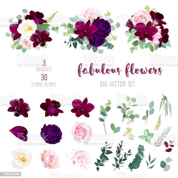 Purple garden rose burgundy red orchid big vector collection vector id1033042950?b=1&k=6&m=1033042950&s=612x612&h=i4gmtdmrkg3nxysjgwjvpjxqahwo8xenhju4rk9ahyo=