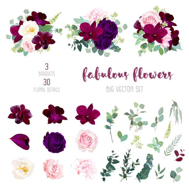 보라색 정원 장미, burgundy 빨간 난초 큰 벡터 컬렉션 - 보라색 stock illustrations