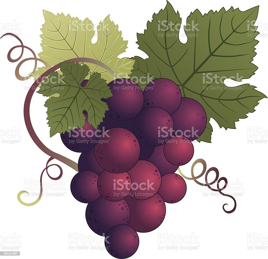 Uva viola uva viola - immagini vettoriali stock e altre immagini di alimentazione sana royalty-free