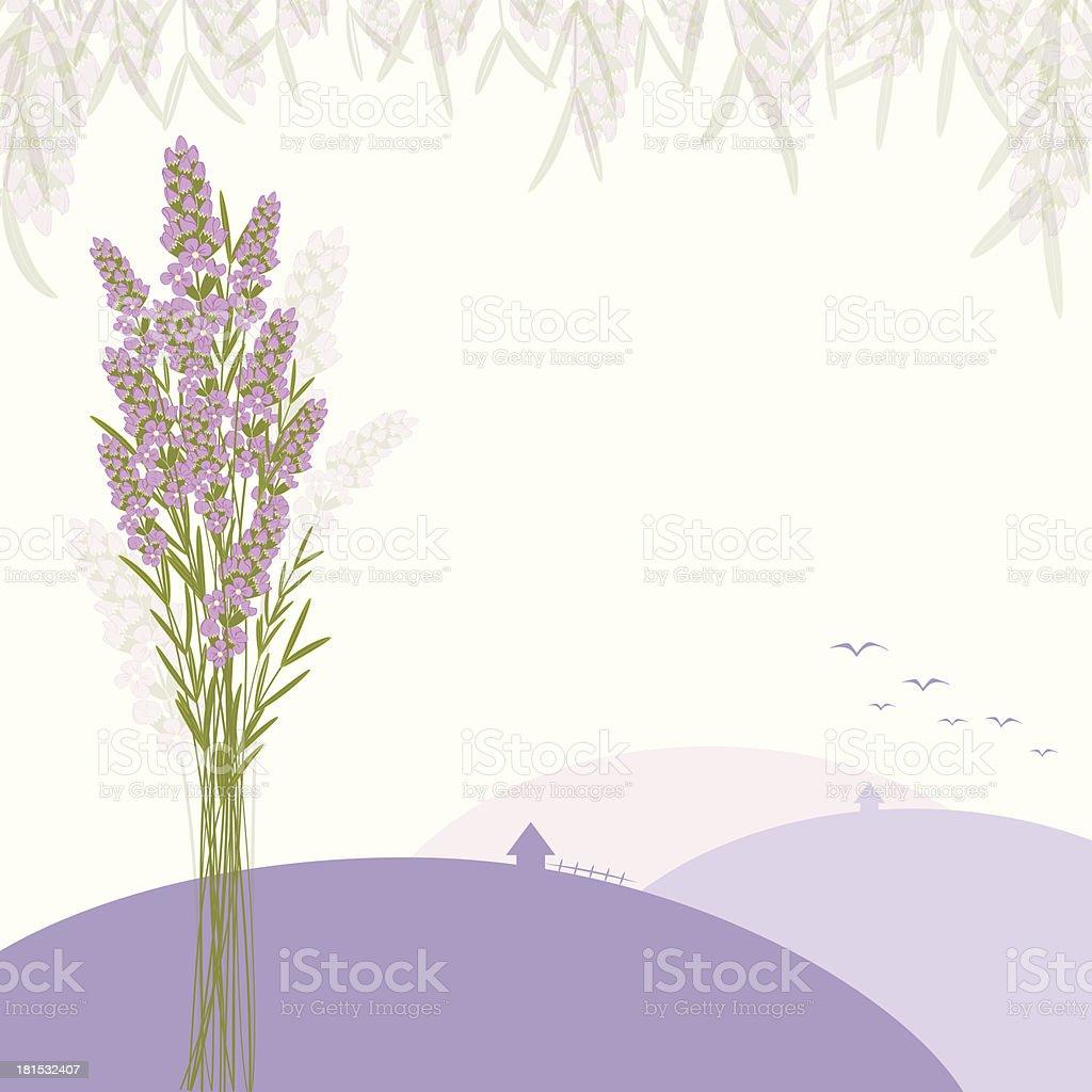 Purple Lavender Flower vector art illustration