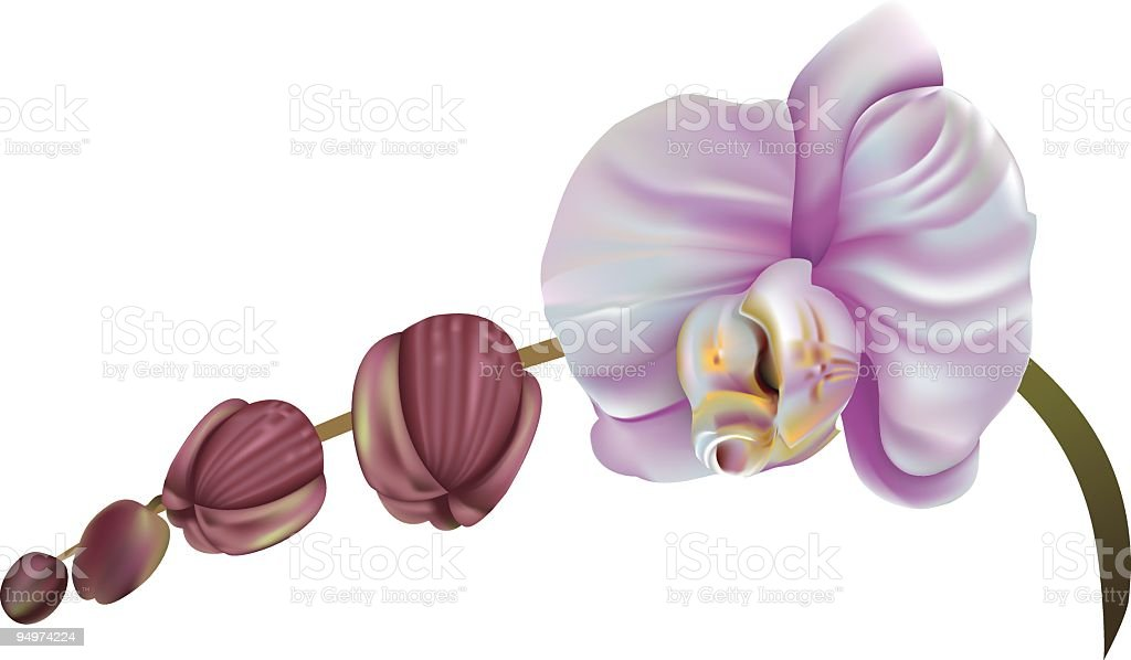 Purple Orchid Blooms royalty-free purple orchid blooms stock vector art & more images of clip art