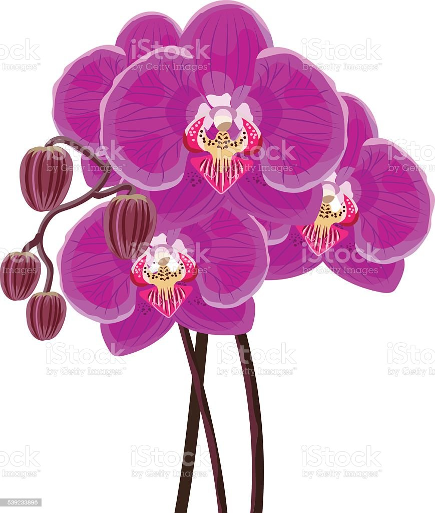 Orquídea púrpura rama sobre un fondo blanco. ilustración de orquídea púrpura rama sobre un fondo blanco y más banco de imágenes de abstracto libre de derechos