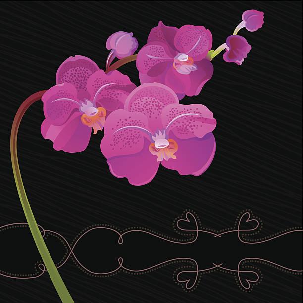 Purple Orchid (Black) vector art illustration