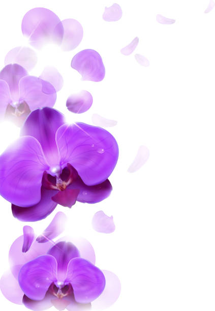 purple orchid floral background of purple orchids orchid stock illustrations
