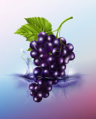 Purple table grapes drop on juice splash and ripple, Realistic Fruit and yogurt, transparent, vector illustration