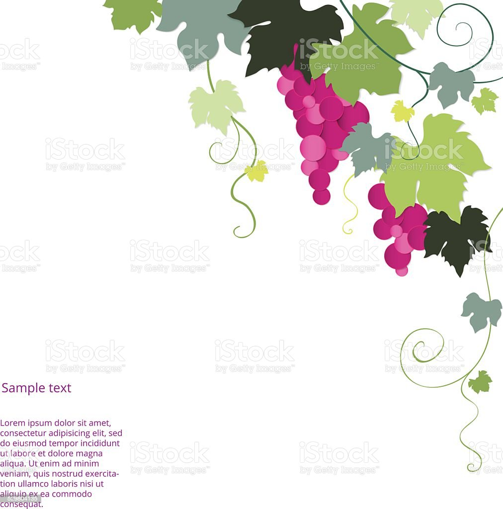 Purple vine grapes with green leaves on the vine vector art illustration