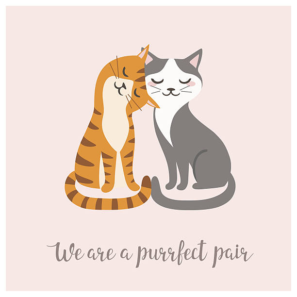 Purrfect pair Valentine's day card with couple of cute cats. cat valentine stock illustrations
