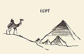 Pyramids camel Giza Cairo Egypt Vector.