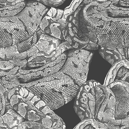 Python Snakes Seamless Repeat Pattern