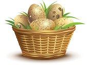 Quail eggs full wicker basket
