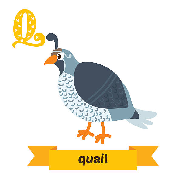 animal with letter q top 60 quail clip vector graphics and illustrations 4782