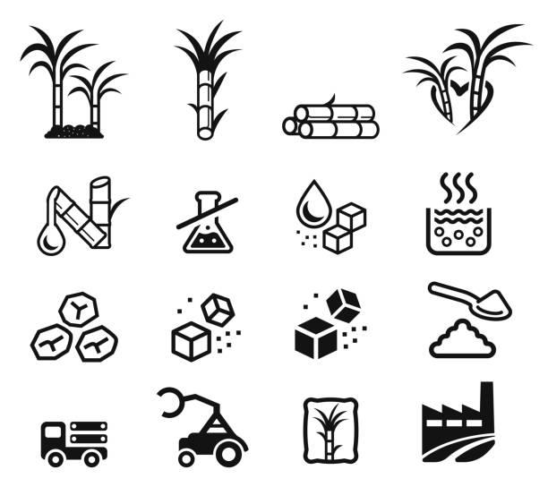 illustrazioni stock, clip art, cartoni animati e icone di tendenza di quality sugar product from sugarcane factory (icon concept.) - canna da zucchero