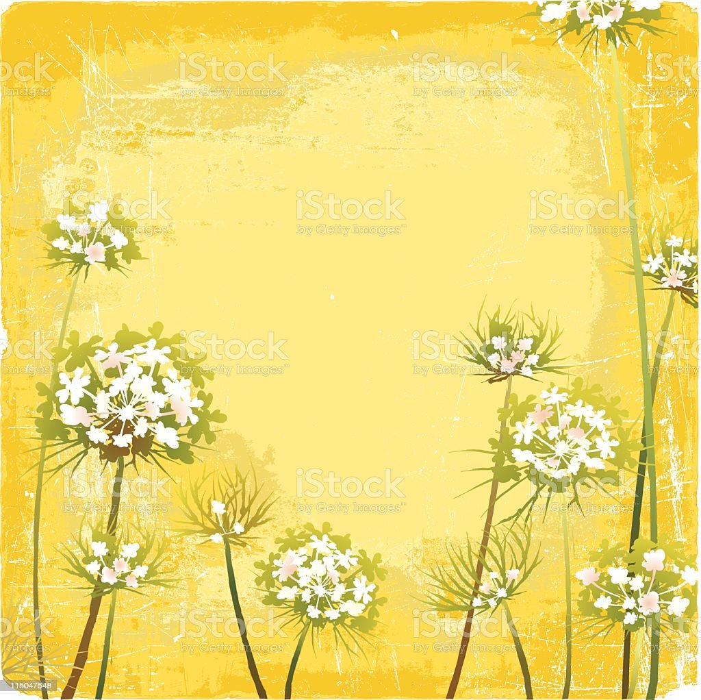 Queen Anne's Lace on a Grunge Background royalty-free stock vector art
