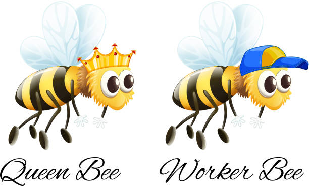 royalty free worker bee clip art vector images illustrations istock