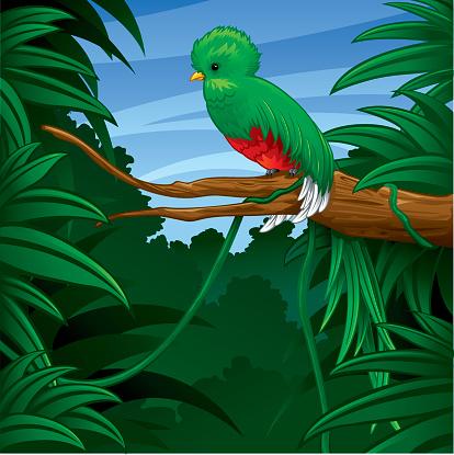 Quetzal in Rainforest