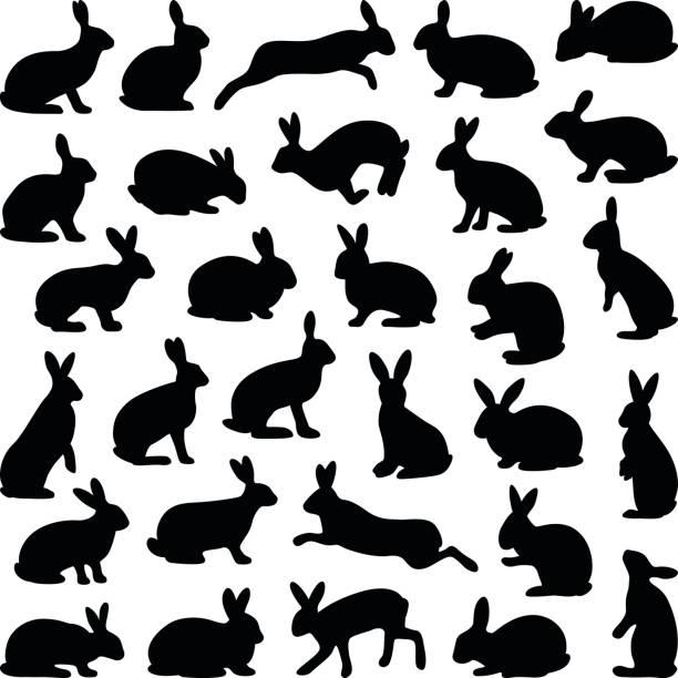 kaninchen und hase - kaninchen stock-grafiken, -clipart, -cartoons und -symbole