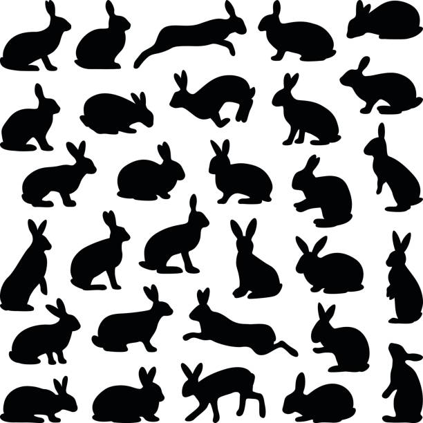 rabbit and hare - rabbit stock illustrations