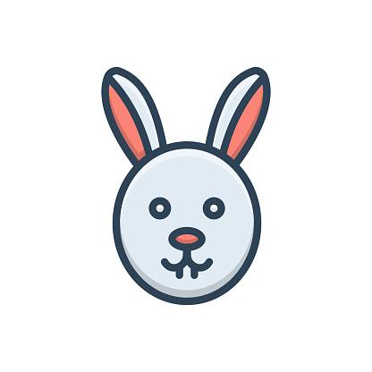 Rabbit conejo