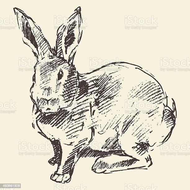 Rabbit engraving style vintage hand drawn sketch vector id493861928?b=1&k=6&m=493861928&s=612x612&h=5lswgpbvokzozhxxbqbtp3rtr0hdr2tzbt5ktzy50bs=