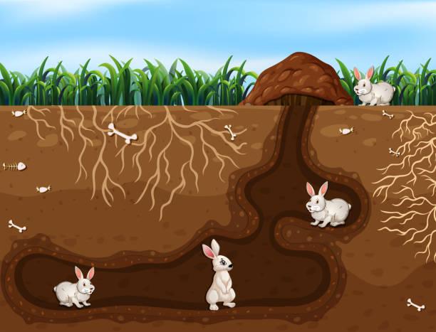 kaninchen-familie leben in das loch - kaninchenbau stock-grafiken, -clipart, -cartoons und -symbole