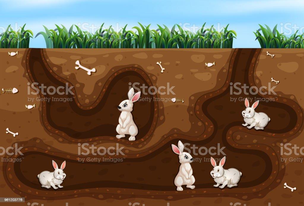 Kaninchen-Familie leben in das Loch – Vektorgrafik