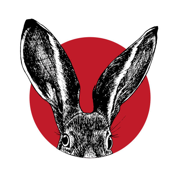 hasenkopf im roten kreis - kaninchen stock-grafiken, -clipart, -cartoons und -symbole