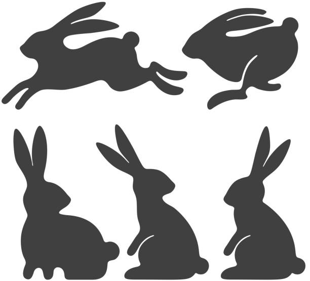kaninchen-set - kaninchen stock-grafiken, -clipart, -cartoons und -symbole