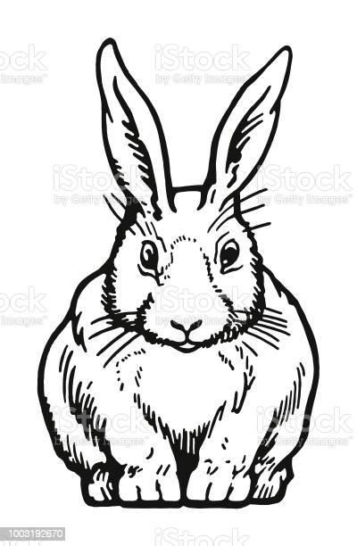 Rabbit vector id1003192670?b=1&k=6&m=1003192670&s=612x612&h=k9gznceuug5g0mka5m1rg ly7o6ahaoo3opt5uux8bw=