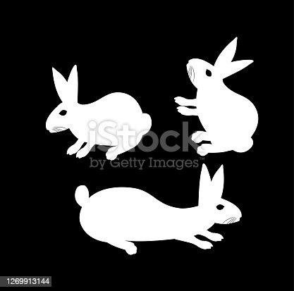 istock rabbit, 1269913144