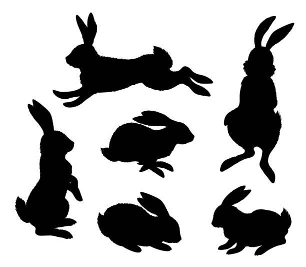 hasen. schwarze silhouette auf weißem hintergrund - kaninchen stock-grafiken, -clipart, -cartoons und -symbole